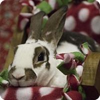 Adopt A Pet :: MacArthur - North Lima, OH