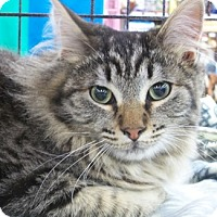 Adopt A Pet :: Sugaree - Castro Valley, CA