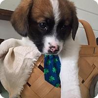 Adopt A Pet :: Chance - Huntsville, TN