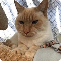 Adopt A Pet :: Sonny - El Dorado Hills, CA
