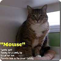 Adopt A Pet :: Mouse - Muskegon, MI