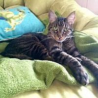 Adopt A Pet :: Christopher - Addison, IL