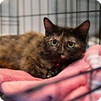 Adopt A Pet :: Hyacinth - Wichita, KS