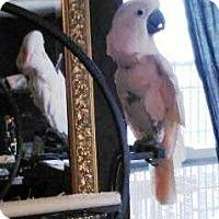 Adopt A Pet :: Peaches - Lenexa, KS