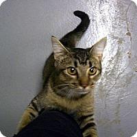 Adopt A Pet :: Kaleb - Denton, TX