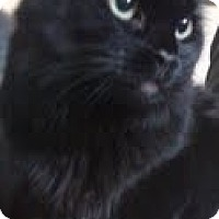 Adopt A Pet :: Holly - Bedford, MA