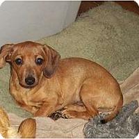 Adopt A Pet :: Tanner - Adamsville, TN