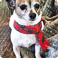 Adopt A Pet :: Cowboy - Canoga Park, CA