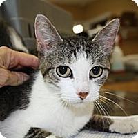 Adopt A Pet :: Maya - Armuchee, GA