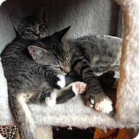 Adopt A Pet :: Zak - Seminole, FL
