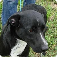 Adopt A Pet :: Toby - Erwin, TN