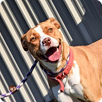 Adopt A Pet :: Blossom - Meridian, ID