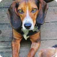 Adopt A Pet :: WOODY - Lincolndale, NY