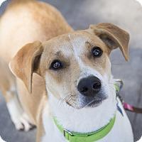 Adopt A Pet :: Marta - Houston, TX