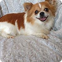 Adopt A Pet :: Razzie - Overland Park, KS