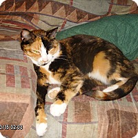 Adopt A Pet :: Autumn Leaf (COURTESY POST) - Baltimore, MD
