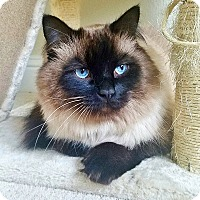 Adopt A Pet :: Riley - Davis, CA