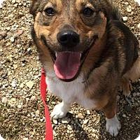 Adopt A Pet :: Cinnamon - Mukwonago, WI