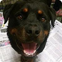 Adopt A Pet :: Clarke - Pembroke, GA