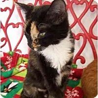 Adopt A Pet :: Mama Campbell - El Cajon, CA