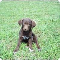 Adopt A Pet :: Janis (pending adoption) - Adamsville, TN