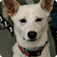 Adopt A Pet :: Lola - Hastings, NY