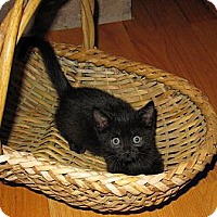 Adopt A Pet :: Phoenix - Harrisburg, NC