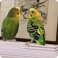 Adopt A Pet :: Flora & Fauna - St. Louis, MO