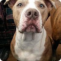 Adopt A Pet :: Kino - Tucson, AZ
