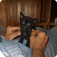 Adopt A Pet :: Berlin - Wellington, OH