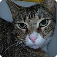 Adopt A Pet :: AJ - Hamburg, NY