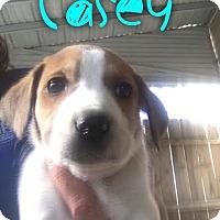 Adopt A Pet :: Casey - Garden City, MI
