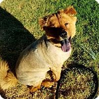 Adopt A Pet :: Joey - Colton, CA