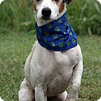 Adopt A Pet :: Gus in Tulsa - Oklahoma City, OK