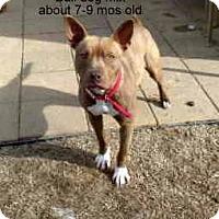 Adopt A Pet :: Ansley - Gadsden, AL