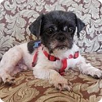 Adopt A Pet :: Willis - Madison, WI