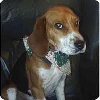 Adopt A Pet :: Jimmy - cedar grove, IN