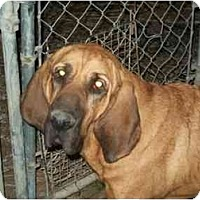Adopt A Pet :: Beulah - Albany, NY