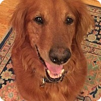 Adopt A Pet :: Heidi - New Canaan, CT