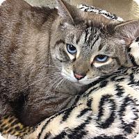 Adopt A Pet :: Kenu - Newport Beach, CA
