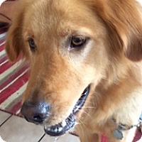 Adopt A Pet :: Woody - Foster, RI