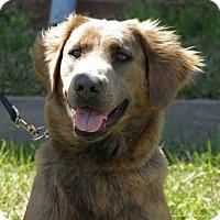 Adopt A Pet :: Keisha - Indian Trail, NC