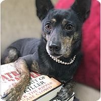 Adopt A Pet :: Gracie - Pascagoula, MS
