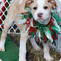 Adopt A Pet :: Poe in CT - Manchester, CT