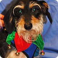 Adopt A Pet :: Groot-Pending Adoption - Omaha, NE