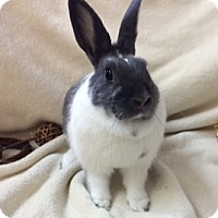 Other/Unknown Mix for adoption in Paramount, California - Nemie