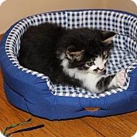 Adopt A Pet :: Mustache - Atlantic, NC
