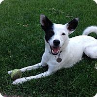 Adopt A Pet :: Sombrita - Princeton, MN