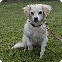 Adopt A Pet :: Moose - Palo Alto, CA