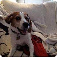 Adopt A Pet :: Isabel - Phoenix, AZ